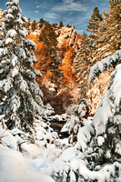 Snowy Colorado -